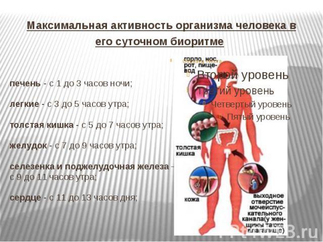 Максимальная активность организма человека в его суточном биоритме печень - с 1 до 3 часов ночи; легкие - с 3 до 5 часов утра; толстая кишка - с 5 до 7 часов утра; желудок - с 7 до 9 часов утра; селезенка и поджелудочная железа – с 9 до 11 часов утр…