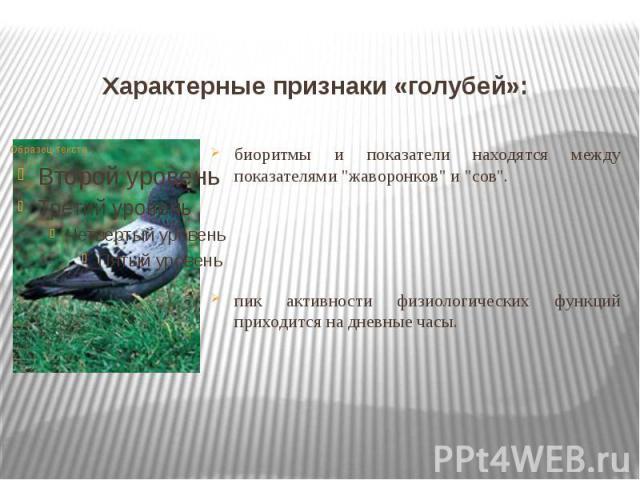 """Характерные признаки «голубей»: биоритмы и показатели находятся между показателями """"жаворонков"""" и """"сов"""". пик активности физиологических функций приходится на дневные часы."""