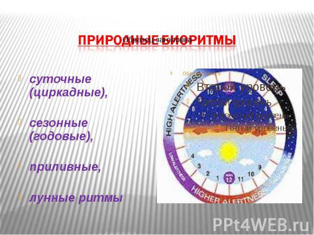 суточные (циркадные), суточные (циркадные), сезонные (годовые), приливные, лунные ритмы
