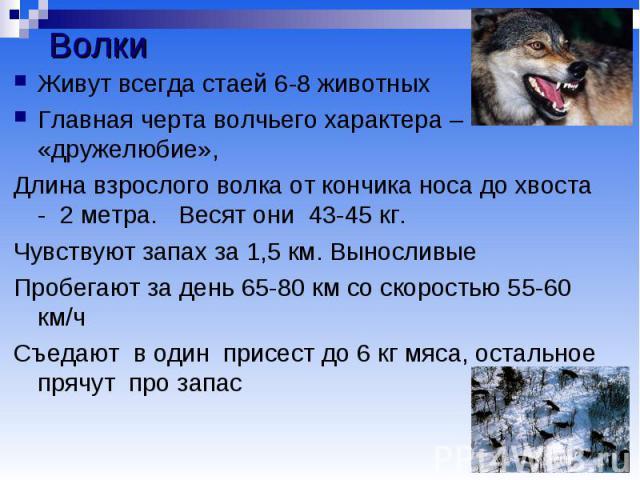 Волки Живут всегда стаей 6-8 животных Главная черта волчьего характера – «дружелюбие», Длина взрослого волка от кончика носа до хвоста - 2 метра. Весят они 43-45 кг. Чувствуют запах за 1,5 км. Выносливые Пробегают за день 65-80 км со скоростью 55-60…