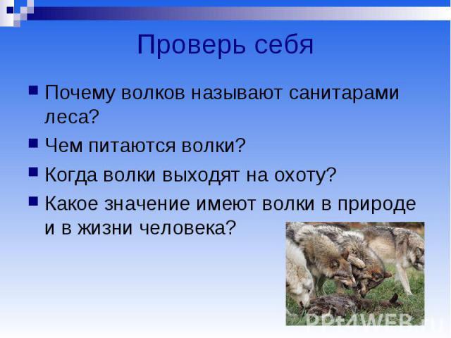 Проверь себя Почему волков называют санитарами леса? Чем питаются волки? Когда волки выходят на охоту? Какое значение имеют волки в природе и в жизни человека?