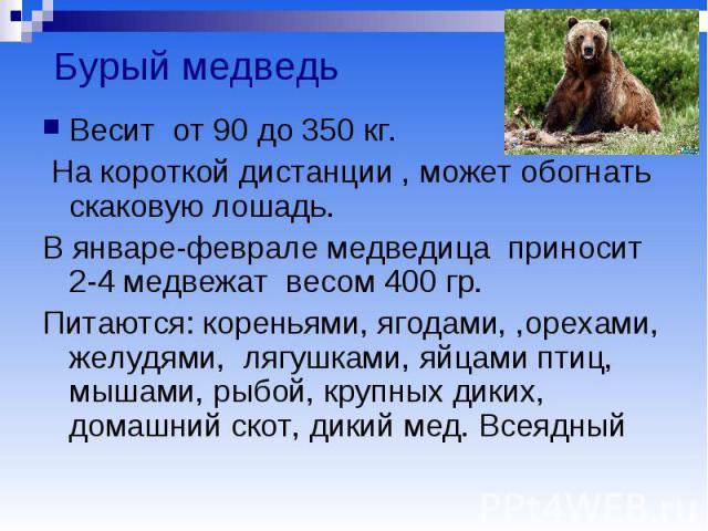 Бурый медведь Весит от 90 до 350 кг. На короткой дистанции , может обогнать скаковую лошадь. В январе-феврале медведица приносит 2-4 медвежат весом 400 гр. Питаются: кореньями, ягодами, ,орехами, желудями, лягушками, яйцами птиц, мышами, рыбой, круп…