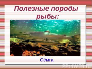 Полезные породы рыбы: Сёмга