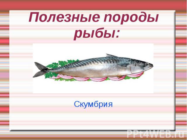 Полезные породы рыбы: Скумбрия