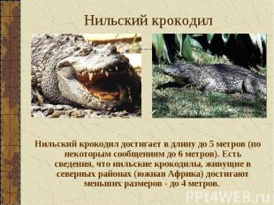 Нильский крокодил достигает в длину до 5 метров (по некоторым сообщениям до 6 ме