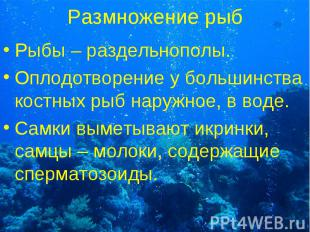 Рыбы – раздельнополы. Рыбы – раздельнополы. Оплодотворение у большинства костных