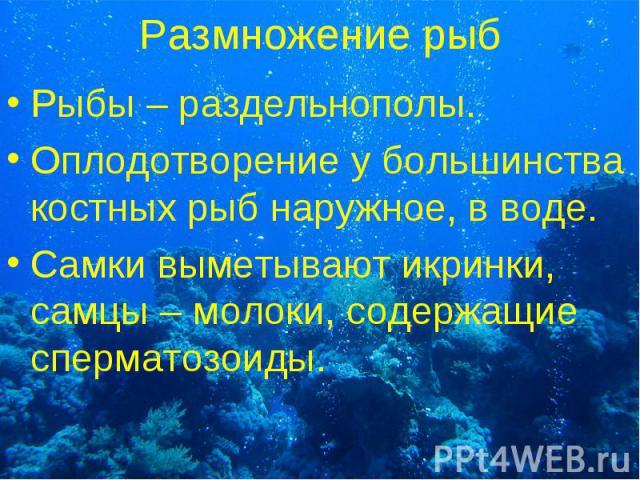 Рыбы – раздельнополы. Рыбы – раздельнополы. Оплодотворение у большинства костных рыб наружное, в воде. Самки выметывают икринки, самцы – молоки, содержащие сперматозоиды.