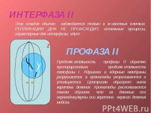 ИНТЕРФАЗА II