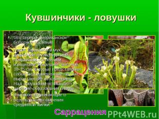 Это северо-американское болотное растение. Это северо-американское болотное раст