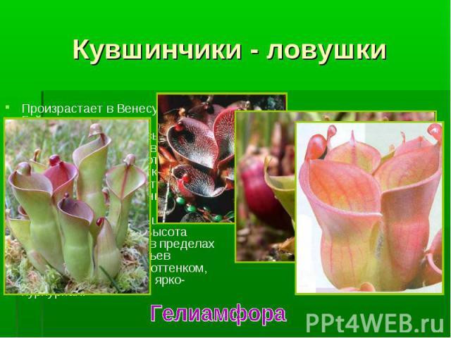 Произрастает в Венесуэле и Гайане. Произрастает в Венесуэле и Гайане. Это многолетние травы, с листьями-ловушками в форме кувшинчиков, образуют розетки. В верхней части широко раскрытой воронки есть небольшой ложковидный вырост, в котором вырабатыва…