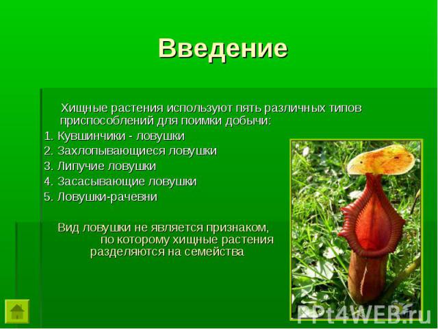 Хищные растения используют пять различных типов приспособлений для поимки добычи: Хищные растения используют пять различных типов приспособлений для поимки добычи: 1. Кувшинчики - ловушки 2. Захлопывающиеся ловушки 3. Липучие ловушки 4. Засасывающие…