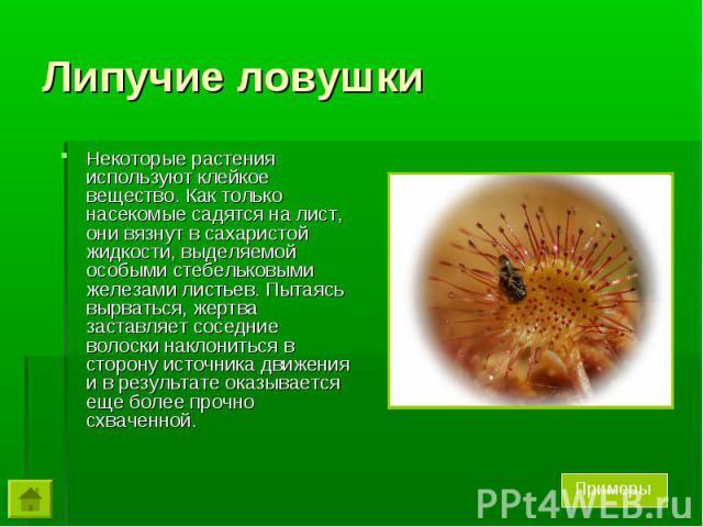 Некоторые растения используют клейкое вещество. Как только насекомые садятся на лист, они вязнут в сахаристой жидкости, выделяемой особыми стебельковыми железами листьев. Пытаясь вырваться, жертва заставляет соседние волоски наклониться в сторону ис…
