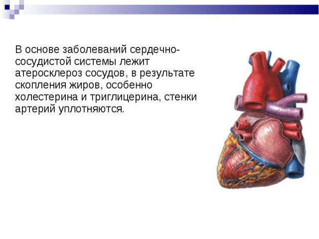 В основе заболеваний сердечно-сосудистой системы лежит атеросклероз сосудов, в результате скопления жиров, особенно холестерина и триглицерина, стенки артерий уплотняются. В основе заболеваний сердечно-сосудистой системы лежит атеросклероз сосудов, …