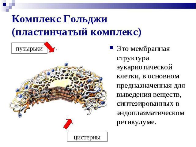 Это мембранная структура эукариотической клетки, в основном предназначенная для выведения веществ, синтезированных в эндоплазматическом ретикулуме. Это мембранная структура эукариотической клетки, в основном предназначенная для выведения веществ, си…