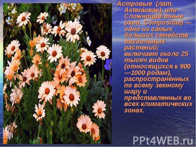 Астровые (лат. Asteráceae), или Сложноцве тные (лат. Compósitae) — одно из самых больших семейств двудольных растений; включает около 25 тысяч видов (относящихся к 900—1000 родам), распространённых по всему земному шару и представленных во всех клим…