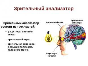 Зрительный анализатор состоит из трех частей: Зрительный анализатор состоит из т