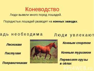 Коневодство Люди вывели много пород лошадей. Породистых лошадей разводят на конн