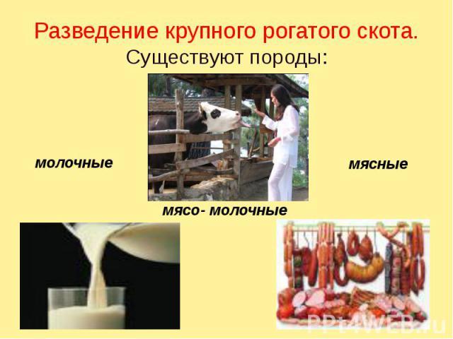 Разведение крупного рогатого скота. Существуют породы: