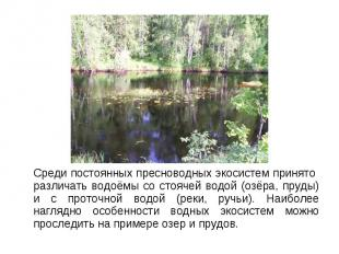 Среди постоянных пресноводных экосистем принято различать водоёмы со стоячей вод