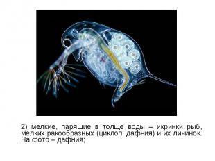 2) мелкие, парящие в толще воды – икринки рыб, мелких ракообразных (циклоп, дафн