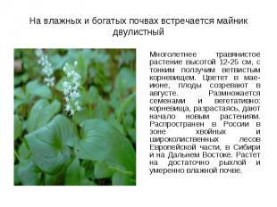 Многолетнее травянистое растение высотой 12-25 см, с тонким ползучим ветвистым к