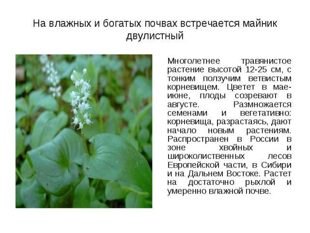Многолетнее травянистое растение высотой 12-25 см, с тонким ползучим ветвистым корневищем. Цветет в мае-июне, плоды созревают в августе. Размножается семенами и вегетативно: корневища, разрастаясь, дают начало новым растениям. Распространен в России…