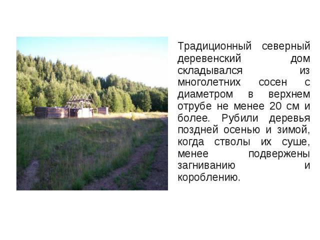Традиционный северный деревенский дом складывался из многолетних сосен с диаметром в верхнем отрубе не менее 20 см и более. Рубили деревья поздней осенью и зимой, когда стволы их суше, менее подвержены загниванию и короблению. Традиционный северный …