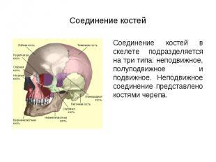 Соединение костей в скелете подразделяется на три типа: неподвижное, полуподвижн