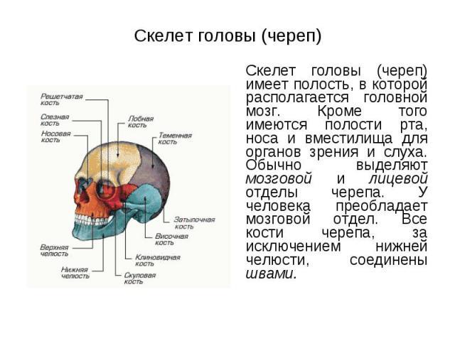 Скелет головы (череп) имеет полость, в которой располагается головной мозг. Кроме того имеются полости рта, носа и вместилища для органов зрения и слуха. Обычно выделяют мозговой и лицевой отделы черепа. У человека преобладает мозговой отдел. Все ко…