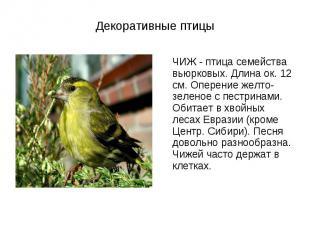 ЧИЖ - птица семейства вьюрковых. Длина ок. 12 см. Оперение желто-зеленое с пестр