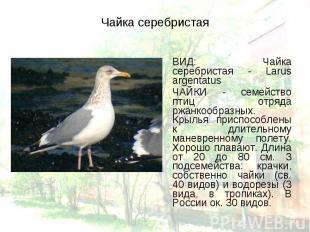 ВИД: Чайка серебристая - Larus argentatus ВИД: Чайка серебристая - Larus argenta