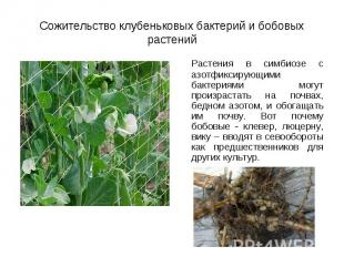 Растения в симбиозе с азотфиксирующими бактериями могут произрастать на почвах,