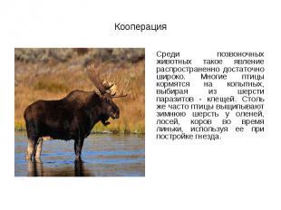 Среди позвоночных животных такое явление распространенно достаточно широко. Мног