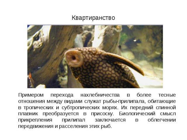 Примером перехода нахлебничества в более тесные отношения между видами служат рыбы-прилипала, обитающие в тропических и субтропических морях. Их передний спинной плавник преобразуется в присоску. Биологический смысл прикрепления прилипал заключается…