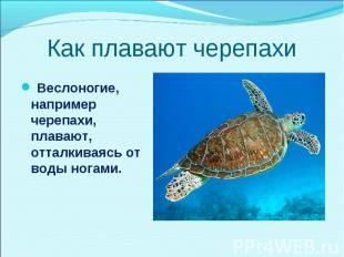 Веслоногие, например черепахи, плавают, отталкиваясь от воды ногами. Веслоногие,