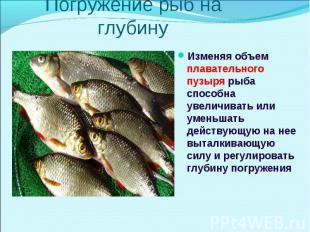 Изменяя объем плавательного пузыря рыба способна увеличивать или уменьшать дейст