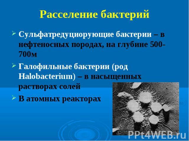 Сульфатредуциорующие бактерии – в нефтеносных породах, на глубине 500-700м Сульфатредуциорующие бактерии – в нефтеносных породах, на глубине 500-700м Галофильные бактерии (род Halobacterium) – в насыщенных растворах солей В атомных реакторах