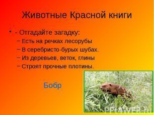 Животные Красной книги - Отгадайте загадку: Есть на речках лесорубы В серебристо