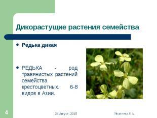 Редька дикая Редька дикая РЕДЬКА - род травянистых растений семейства крестоцвет