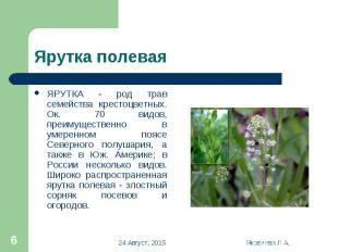 ЯРУТКА - род трав семейства крестоцветных. Ок. 70 видов, преимущественно в умере