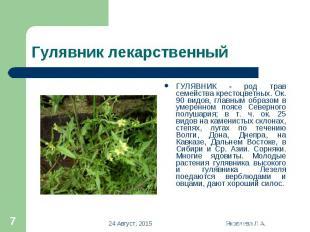 ГУЛЯВНИК - род трав семейства крестоцветных. Ок. 90 видов, главным образом в уме