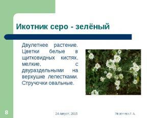 Двулетнее растение. Цветки белые в щитковидных кистях, мелкие, с двураздельными