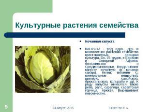 Кочанная капуста Кочанная капуста КАПУСТА - род одно-, дву- и многолетних растен
