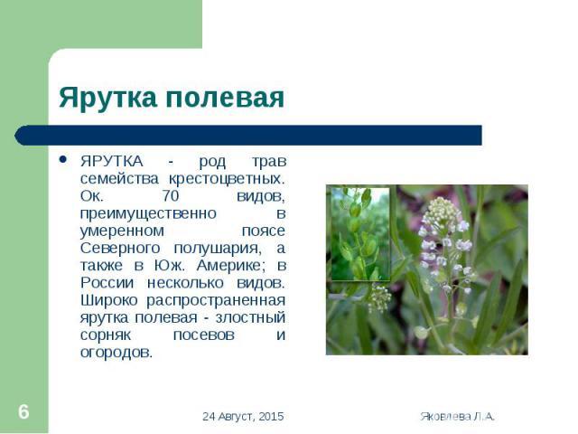 ЯРУТКА - род трав семейства крестоцветных. Ок. 70 видов, преимущественно в умеренном поясе Северного полушария, а также в Юж. Америке; в России несколько видов. Широко распространенная ярутка полевая - злостный сорняк посевов и огородов. ЯРУТКА - ро…