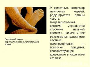 У животных, например ленточных червей, редуцируются органы чувств, пищеварительн