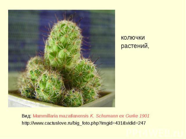 колючки растений, колючки растений,