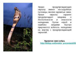 Яркую предупреждающую окраску имеют несъедобные гусеницы, многие ядовитые змеи.