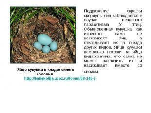 Подражание окраски скорлупы лиц наблюдается в случае гнездового паразитизма У пт