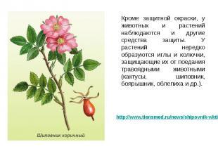 Кроме защитной окраски, у животных и растений наблюдаются и другие средства защи