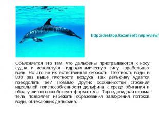 Объясняется это тем, что дельфины пристраиваются к носу судна и используют гидро